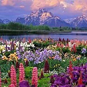 Альпийские цветы (отдушка)