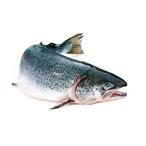 ДНК из молок лососевых рыб
