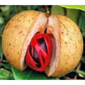 Масло Комбо (Pycnanthusangolensis)