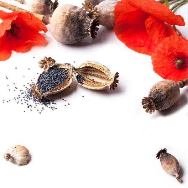 Масло семян Мака рафинированное